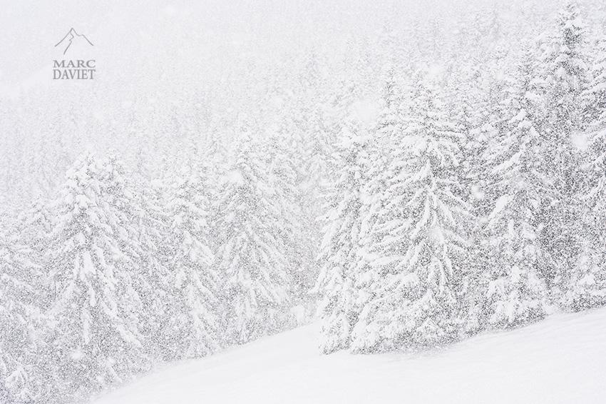 sapins sous la neige à la Sambuy